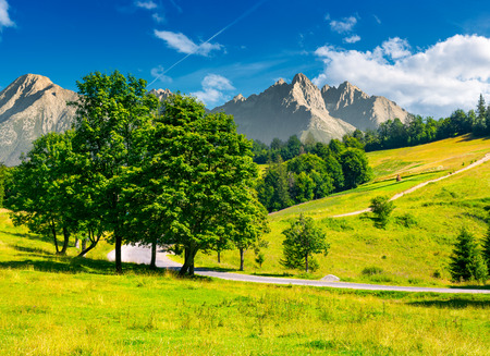 trees by the road in High Tatra mountains. composite image of nature scenery in mountainous area. lovely countryside background. wonderful summer weather with some clouds on a blue sky