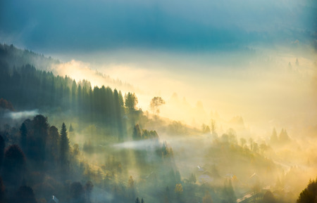 trees in glowing morning fog. gorgeous nature background. amazing autumnal atmosphere in Carpathian mountains Stock Photo