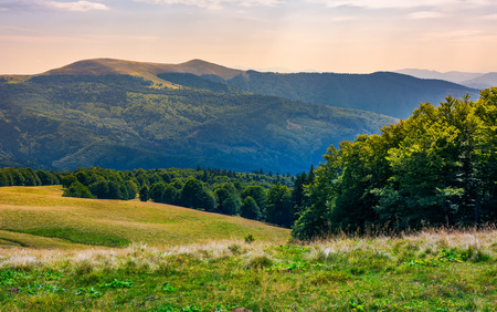 beech forests of Carpathian mountains. gorgeous landscape of Svydovets mountain ridge. beautiful nature scenery in late summer Stock Photo - 101904132