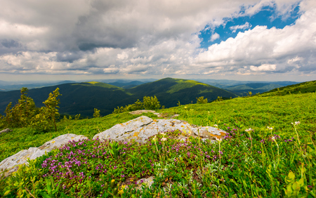 wild herbs among the rocks in summer mountains. wonderful scenery of Carpathian nature Stock Photo - 101904134