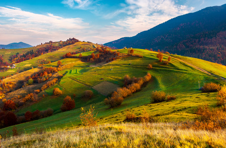 beautiful mountainous countryside in autumn. vivid fall colors at sunrise under the gorgeous sky. dreamy landscape of Carpathian mountains