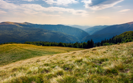 grassy meadow on forested hillside of Carpathians. lovely summer landscape in mountains. location near Svydovets mountain ridge, Ukraine Stock Photo