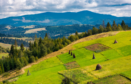hillside with row of haystacks on rural field. beautiful summer agriculture scenery in mountainous area Stock Photo