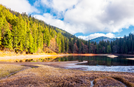 beautiful scenery around the Synevyr lake. tall trees around the body of water in mountains. lovely autumn weather with cloudy sky