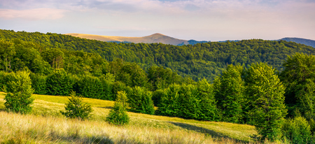 panorama of Forested Carpathian mountains. beech forest on the grassy meadow and mountain peak in the distance. wonderful atmosphere of summer evening Stock Photo