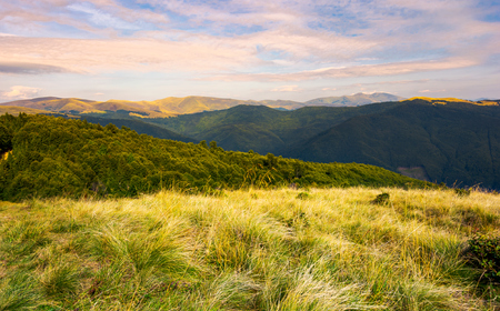 Grassy meadows of Svydovets ridge at sunset. beautiful landscape of Carpathian mountains under the gorgeous evening clouds