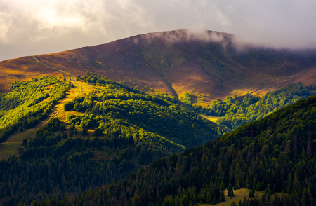 low clouds above the forested hill in sunlight. beautiful scenery of Carpathian Borzhava mountain ridge. lovely autumnal background Standard-Bild - 102851762