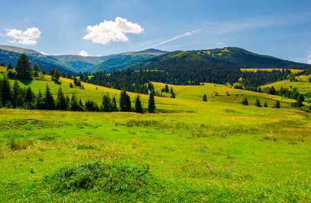 Grassy meadows of Borzhava valley. forested hill with Velykyi Verkh peak in the distance. lovely summer day with fluffy cloud on a blue sky. popular tourist destination of Crapathian mountains, UA