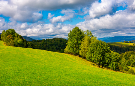 beautiful grassy meadow on hillside in mountains. row of trees on the edge of a hill under the gorgeous cloudy sky Stock Photo