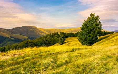 beech forests of Carpathian mountains in evening. hills of Svydovets mountain ridge in the distance. wonderful travel destination in Carpathian mountains Ukraine 版權商用圖片 - 102851780