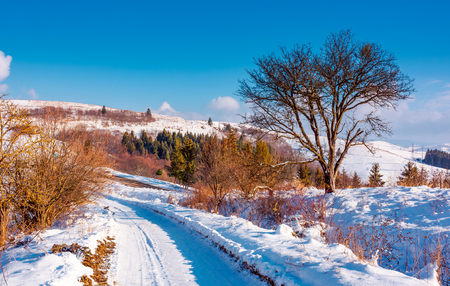 tree along the road through snowy hillside. lovely winter forenoon in mountains. spruce forest in the distance Stock Photo