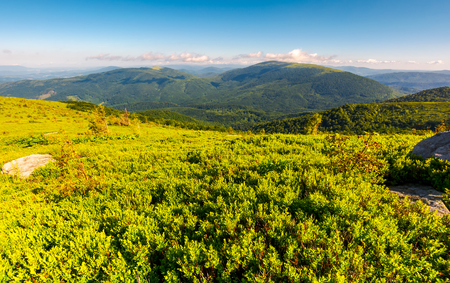 grassy hillside in summer. forested mountain in the distance. beautiful landscape in the morning