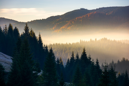 glowing fog in mountains at sunrise. beautiful autumn scenery of Apuseni Natural Park in Romania Stock Photo
