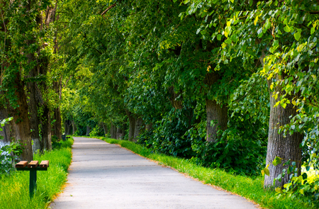 path below the linden trees. lovely summer scenery of the longest linden alley in Europe Stok Fotoğraf - 102886087