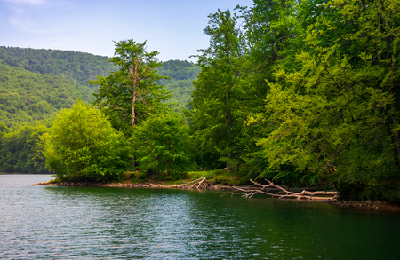 beech forest on the shore of mountain lake. beautiful summer landscape.