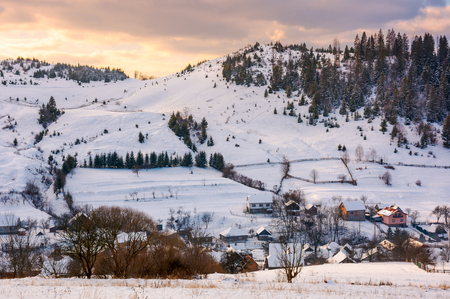 village down the hill on winter sunset. lovely mountainous countryside of Carpathians. spruce forest on top of the hill under the evening cloudy sky. cold weather