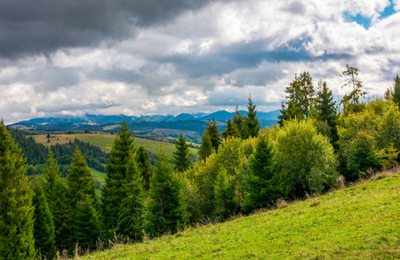 forested hills of Carpathian mountains. beautiful landscape with mountain ridge in the distance