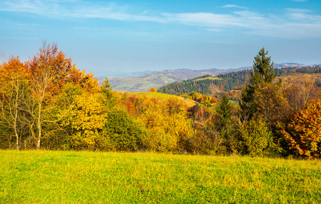 forest on grassy meadow in autumn at sunrise. forested mountains in the distance. colorful foliage on trees Stock Photo