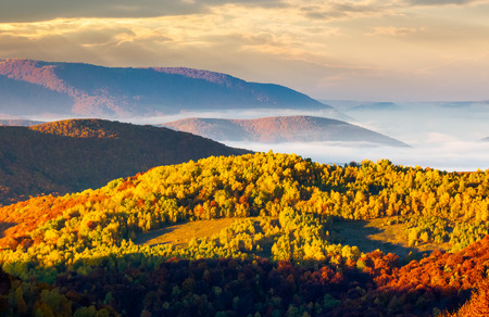 cloud inversion in autumn mountains. beautiful morning scenery of Carpathian mountains. Colorful foliage on hillside. thick fog float in valley.