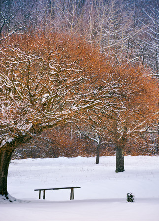 wooden bench under the trees in winter forest. lovely nature scenery Stock Photo