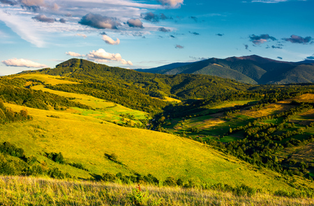 grassy hillsides in high mountains in afternoon. beautiful summer landscape with Borzhava mountain ridge in the distance