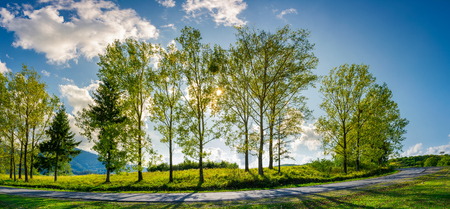 trees along the mountain road in afternoon. beautiful panorama of mountain landscape. turnaround of winding serpentine. lovely cloudscape on a blue sky. sun behind branches and foliage 写真素材 - 103702402