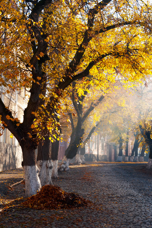 trees in golden foliage on streets. beautiful autumn scenery on old town Uzhgorod, Ukraine Stock Photo