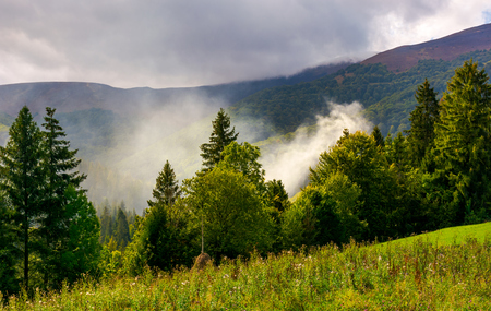 smoke from the fire in forest. mountainous summer landscape. environmental problem and ecology disaster of Carpathian countryside