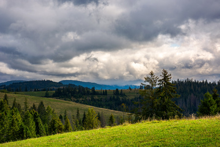 mountain landscape. meadow on hill side with coniferous forest