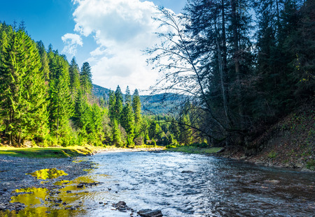 wild mountain river in forest. lovely autumn scenery of Carpathian nature Stock Photo