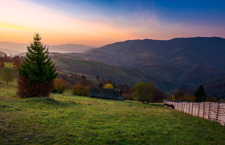 wooden fence on a grassy rural hillside at autumn dawn. horese, woodshed and spruce in the scene. gorgeous landscape in forested mountains with red foliage Stock Photo