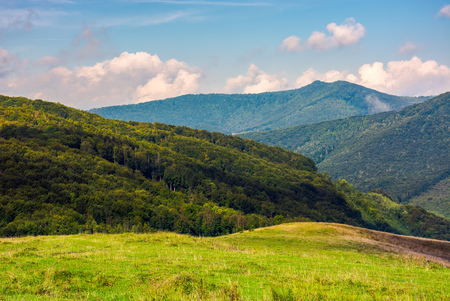 few trees on a hillside meadow in high mountains on a summer day Stock Photo