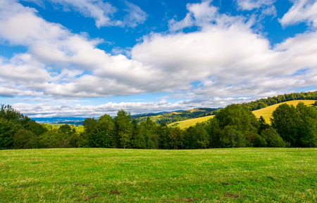 beautiful grassy meadow on hillside in mountains. row of trees on the edge of a hill under the gorgeous cloudy sky Stock Photo - 104190978