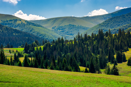 spruce forest on grassy hills of Pylypets. beautiful countryside at the foot of mighty Borzhava mountain ridge in summer Stock Photo - 104190986