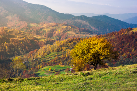 tree on a grassy hillside in autumn mountains. beautiful scenery at sunrise. small village down the hill in valley Stock Photo