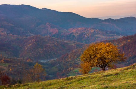 tree on a grassy hillside in autumn mountains. beautiful scenery at dawn. small village down the hill in valley Stock Photo
