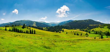 panorama of mountainous landscape in summer. spruce forest on a grassy hills in the valley of Carpathian mountain. beautiful view of Borzhava mountain ridge with Velykyi verkh peak in the distance Фото со стока