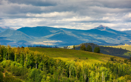 forested hills of Carpathian mountains. wonderful landscape in early autumn on a cloudy day. Pikui and Gostra mountain in the far distance. Stock Photo