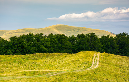 dirt road uphill in to the beech forest. beautiful mountainous landscape in summer. location Svydovets mountain ridge