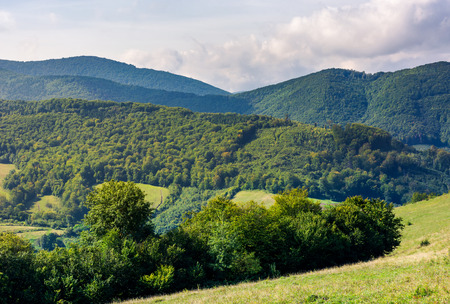 forested hills of Carpathian mountains. lovely mountainous landscape in summer