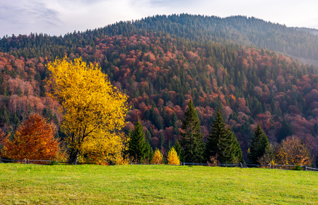 trees on grassy meadow in autumn. lovely scenery of a park in mountainous area. red and yellow foliage in forest