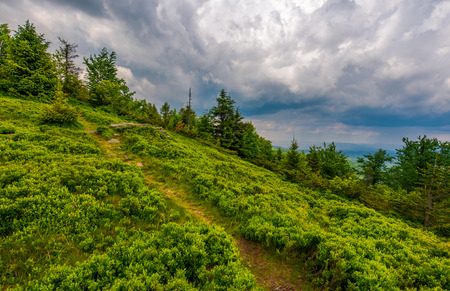 foot path uphill in to the forest. lovely summer scenery. hiking and outdoor activities concept. dark cloudy sky. Stock Photo - 104417871