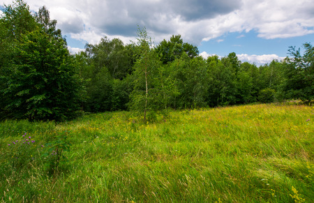 Large meadow among beech forest in summer. beautiful scenery on a cloudy and windy day
