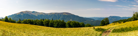 Beautiful panorama of summer landscape in mountain. beech forest on a grassy meadow. huge mountain in the far distance.