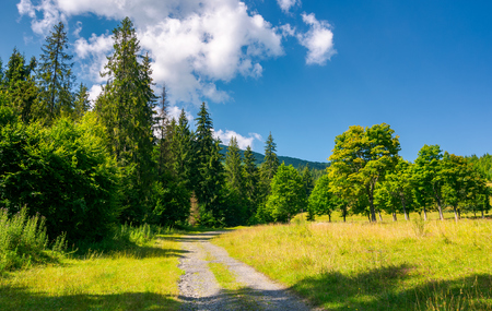 Country road in to the deep spruce forest lovely nature scenery in summer. travel by car concept Stock Photo