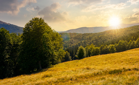 Meadow on the forested hill in summer mountain landscape at sunset. beautiful nature scenery on high altitude Stock Photo