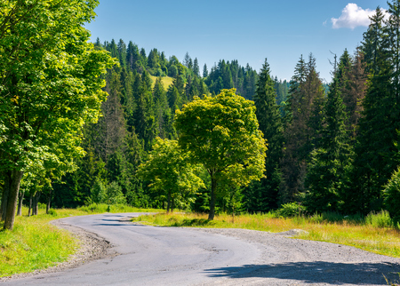 trees along the winding road. lovely nature scenery in summer time. travel by car concept Stock Photo