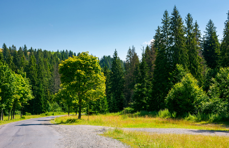 trees along the winding road through forest. lovely nature scenery in summer. travel by car concept Stock Photo