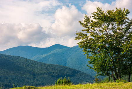 tree on the grassy meadow in mountains. early autumn countryside with beautiful cloudscape. lovely nature background