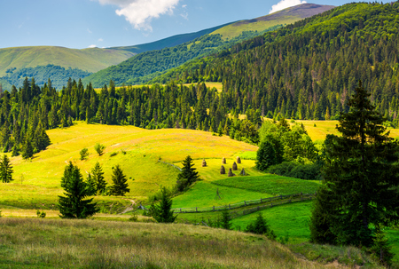 beautiful rural scenery in mountains. haystack on the grassy agricultural fields among the spruce forest on the hills Stock Photo